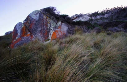 GRASS AND ROCK